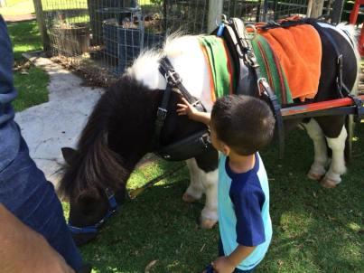 Mummy! Horse! No Jah, donkey....